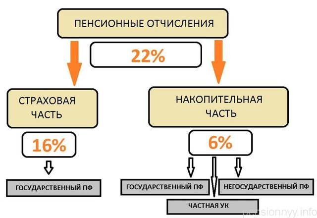 Отчисление в пенсионный фонд: порядок и условия взносов, способы проверки, законы