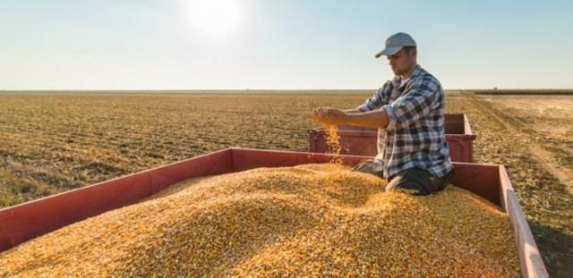 Пенсия фермерам в России: размеры выплат, пенсионные отчисления членов КФХ, сроки выхода на пенсию, последние изменения